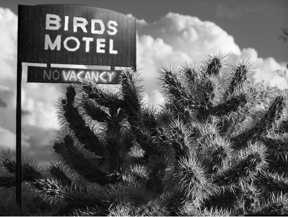 birdshotel2