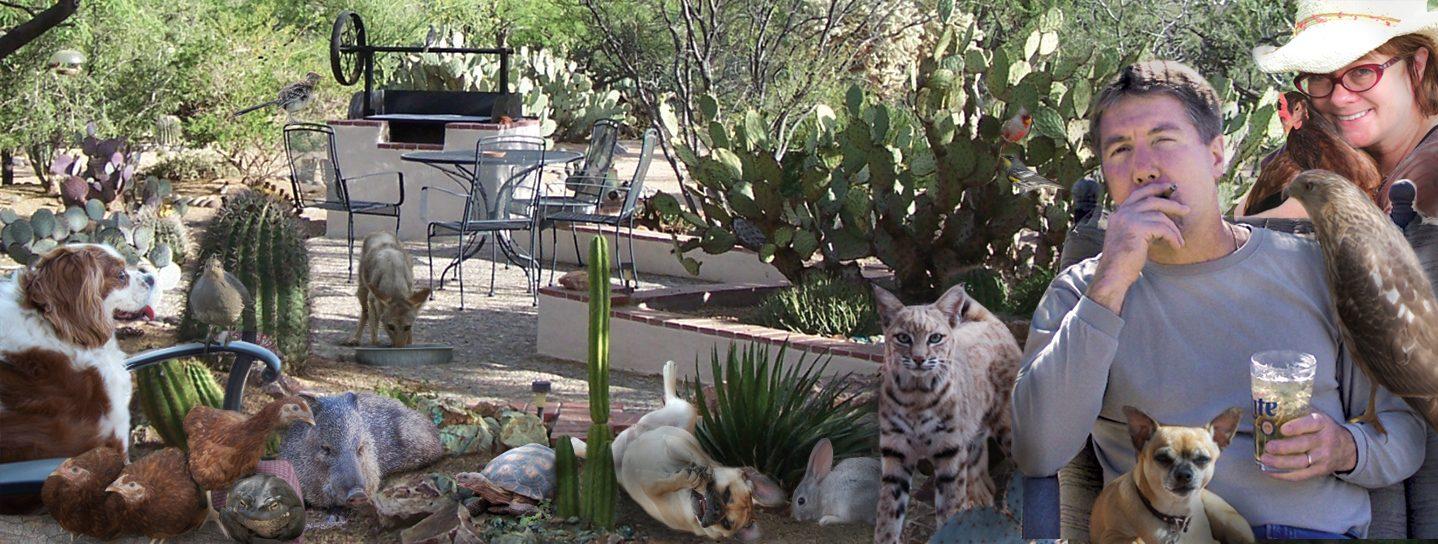 Todd's Backyard