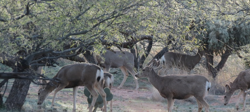 Home, Home on Deer Range…